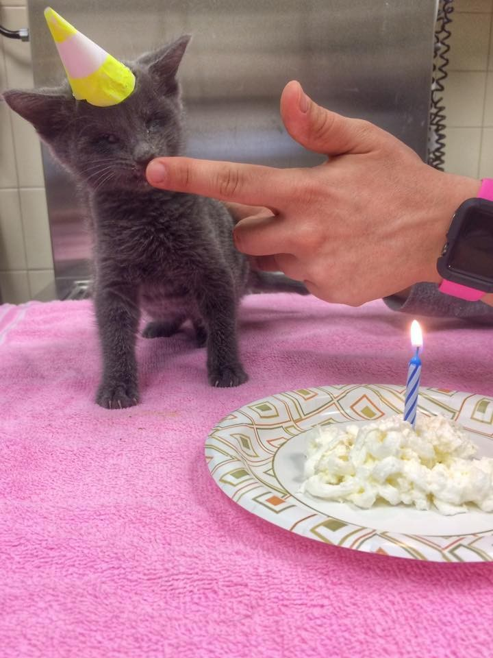 lemon the kitten at a birthday party