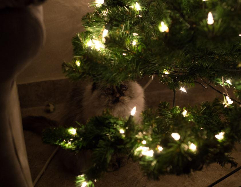 cat christmas lights4