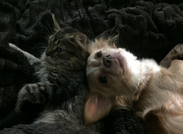 cheshire the cat 9