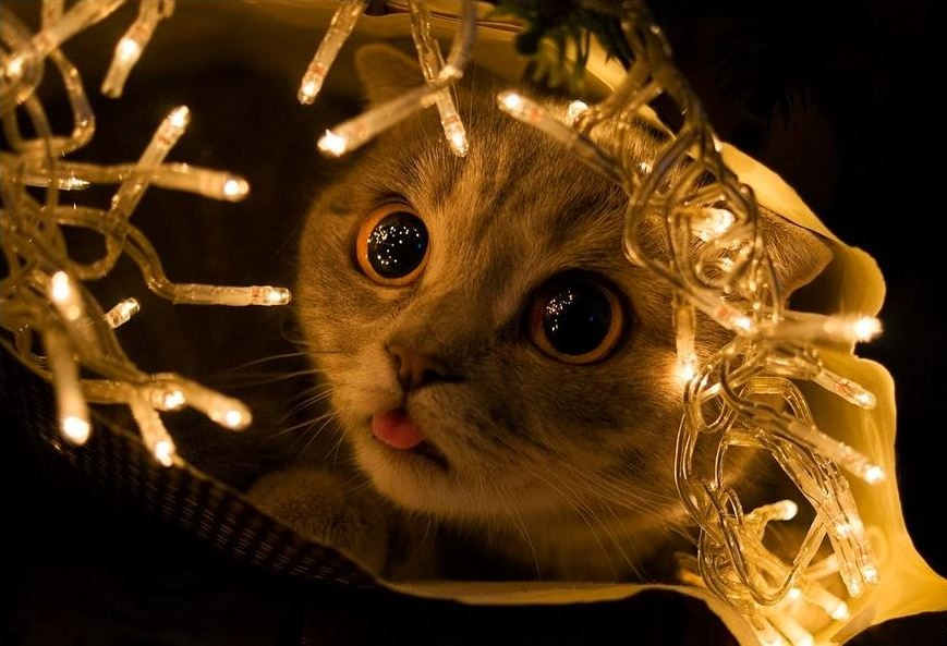 cat christmas lights 9