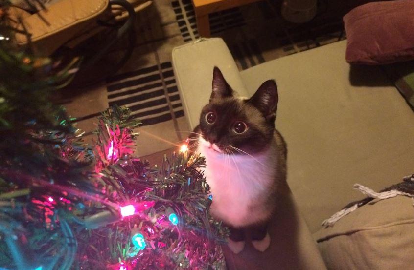 christmas cat lights3