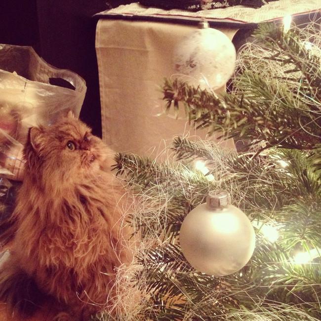 cat christmas lights 8