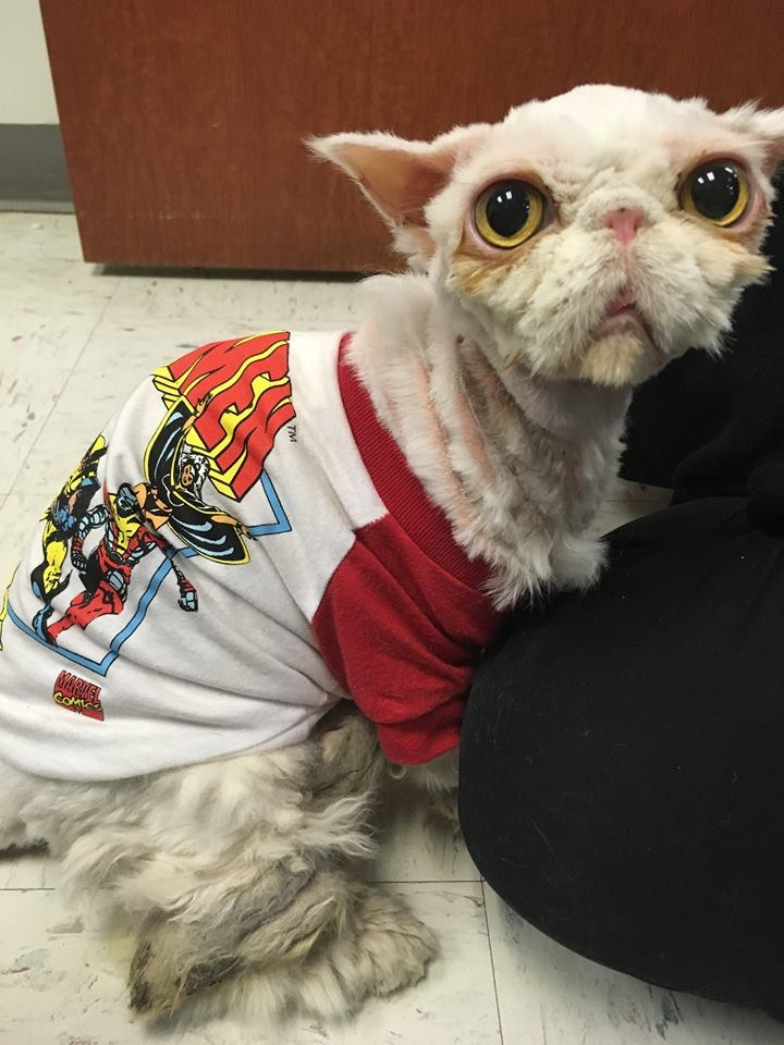sinbad the cat 6