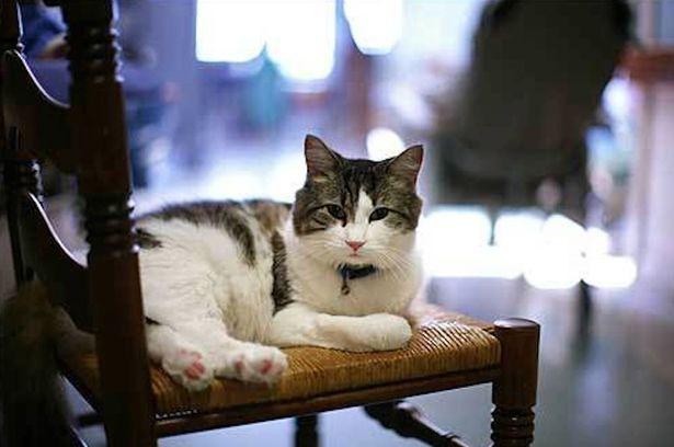 oscar the cat sitting on a chair