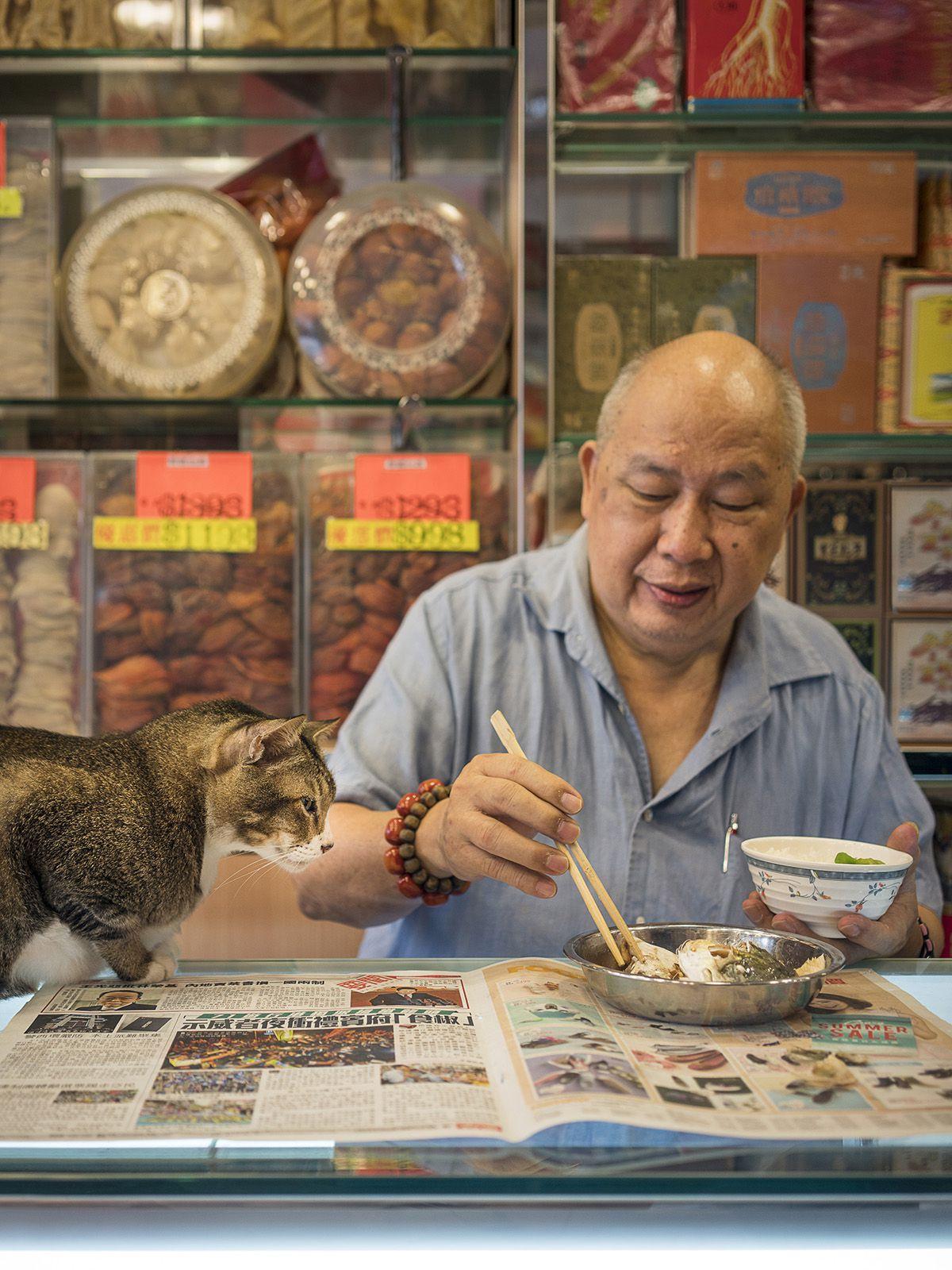 hong kong cats 13