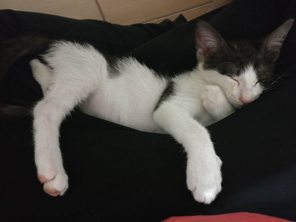 dante the kitten 9