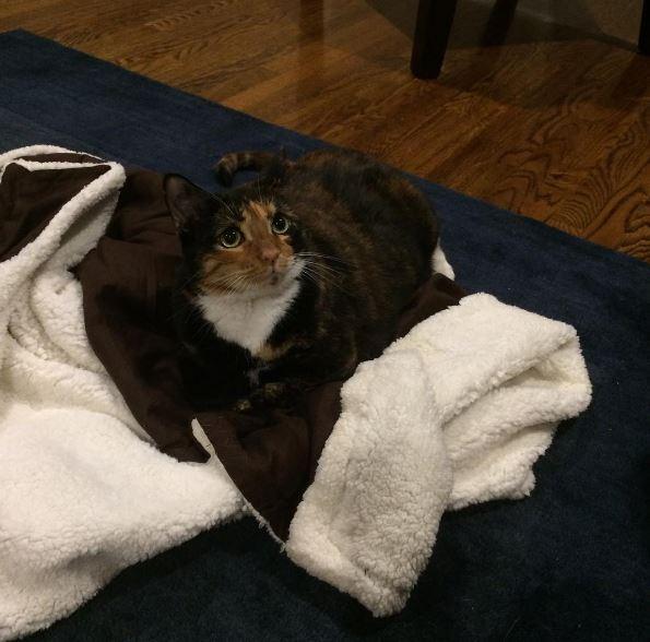 mia the cat 3