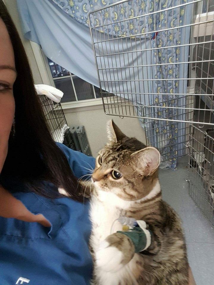 minnie at the vet 2