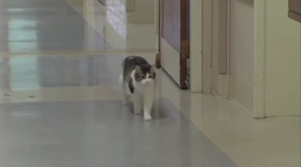 oscar the cat walking the halls