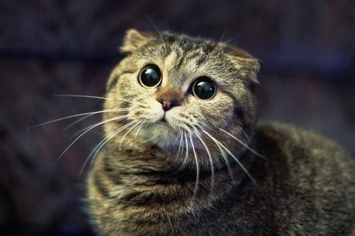 11 Cats With Adorable Quot Murdery Quot Eyes
