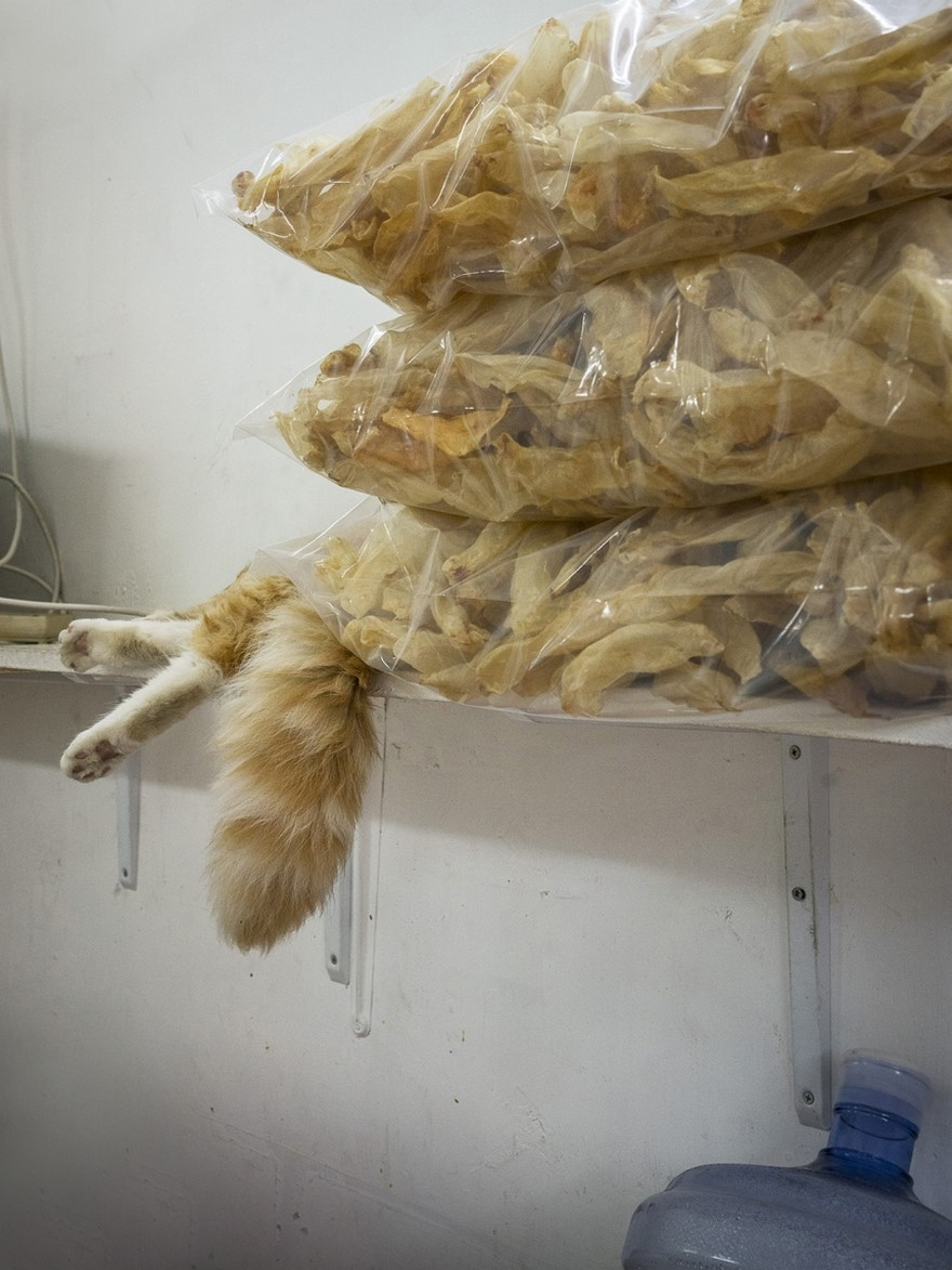 hong kong cats 6