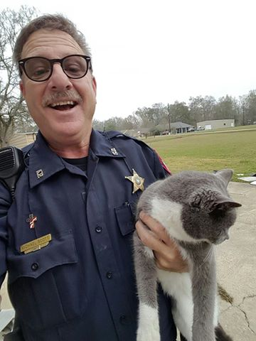 bella the cat rescued