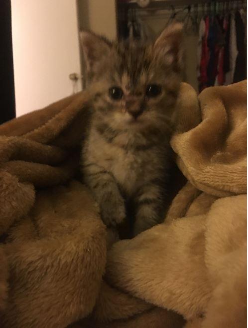athena the kitten 2