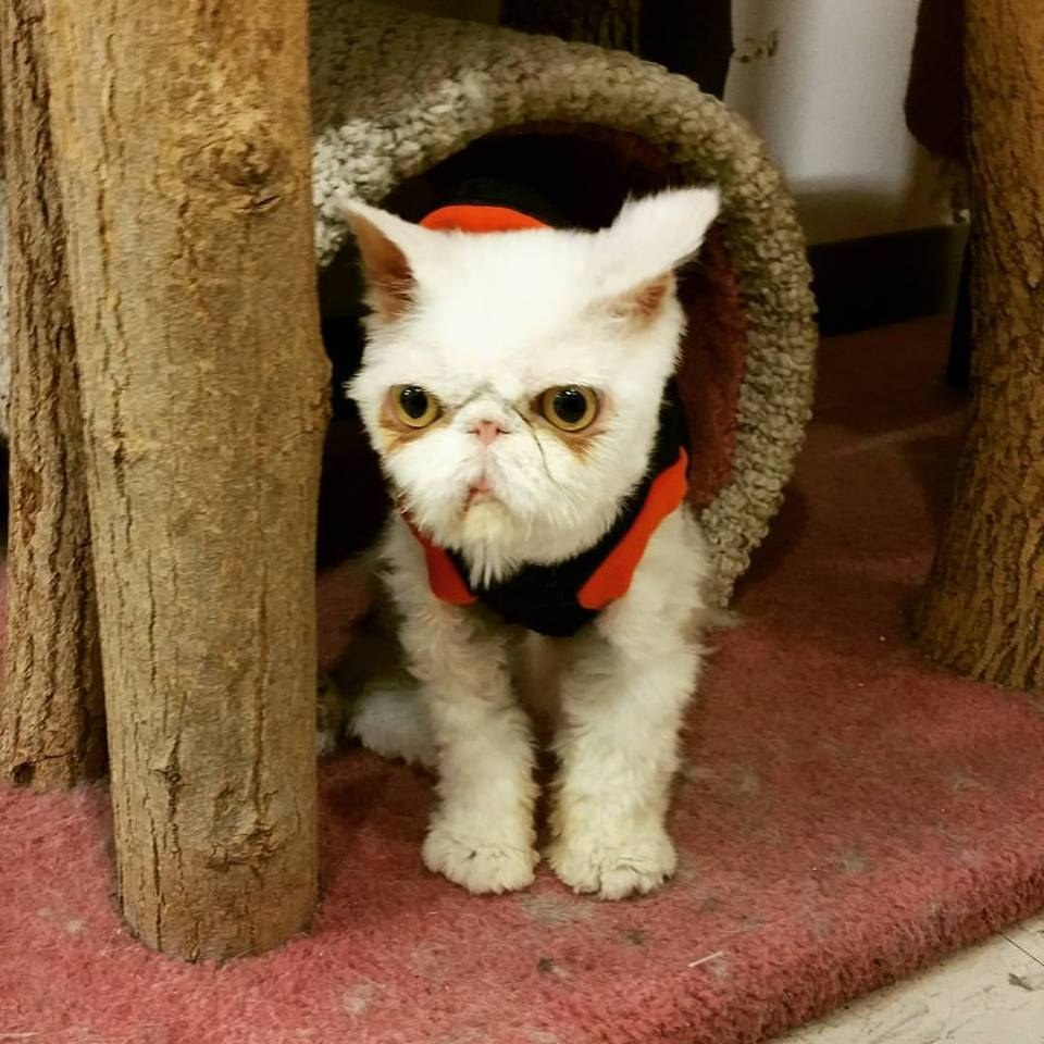 sinbad the cat 9