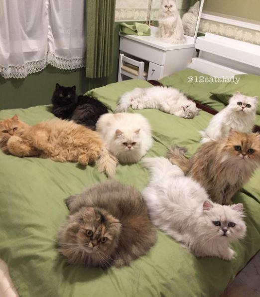 12 persian cats 3