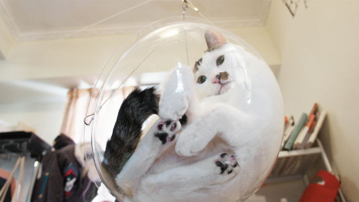Wonderful Transparent Bubble Chairs Are The Hot New Accessory For Your Cat (Gallery)