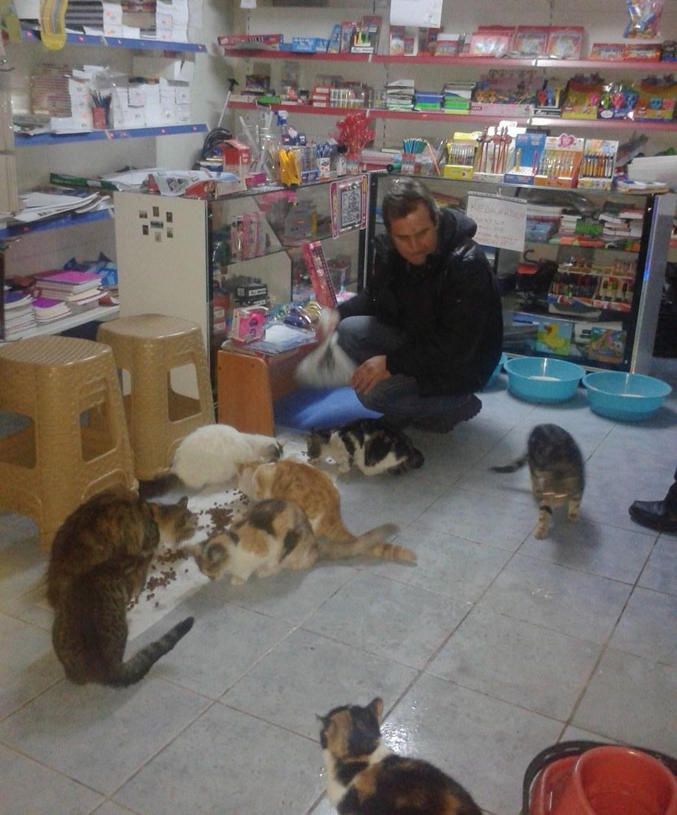 bayal and his shop cats 2