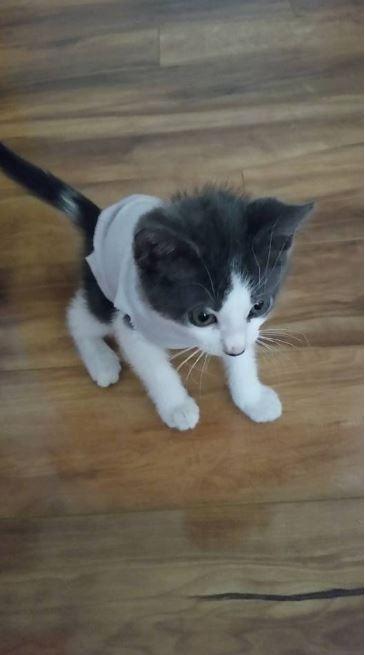 indy the kitten 2
