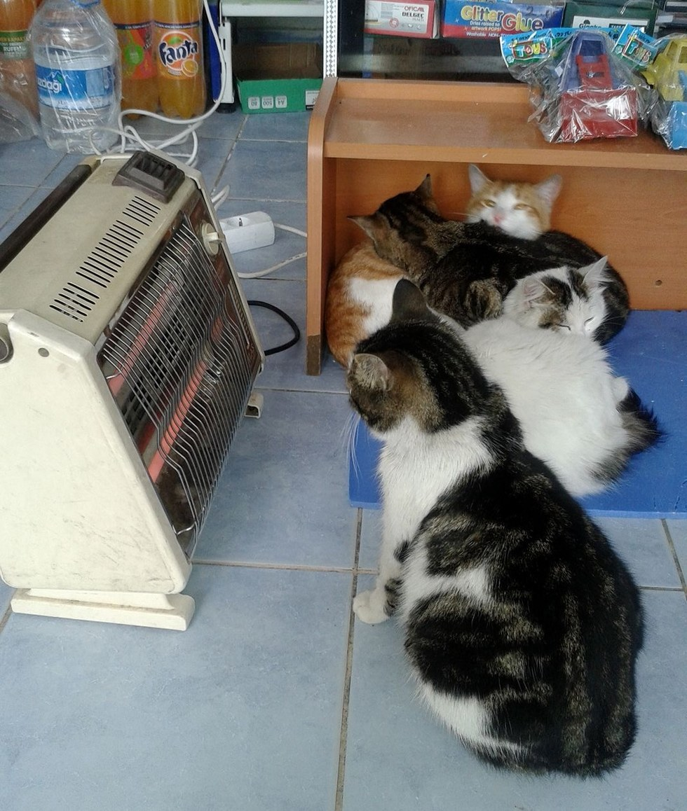 bayal and the shop cats getting some heat