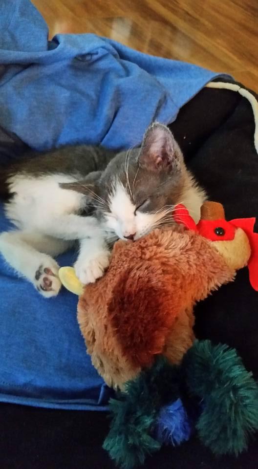indy the kitten 8