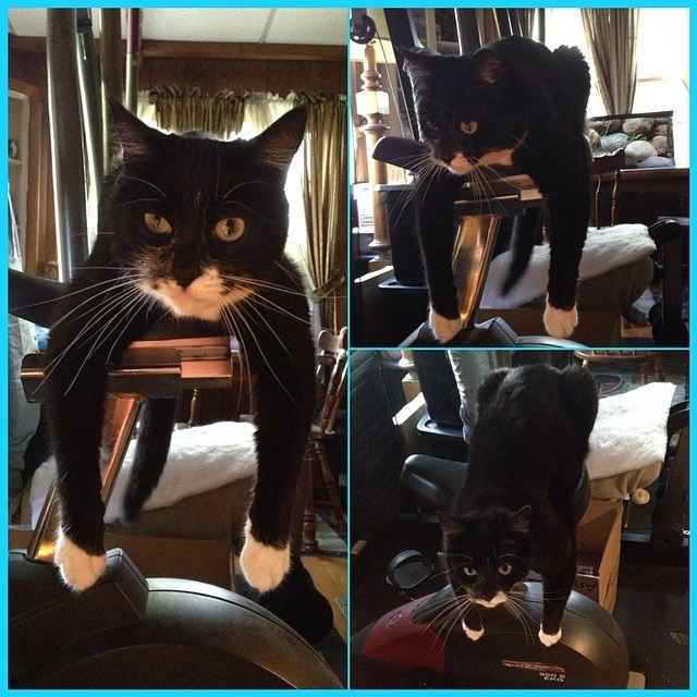 dash the cat 2