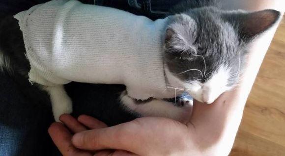 indy the kitten 3