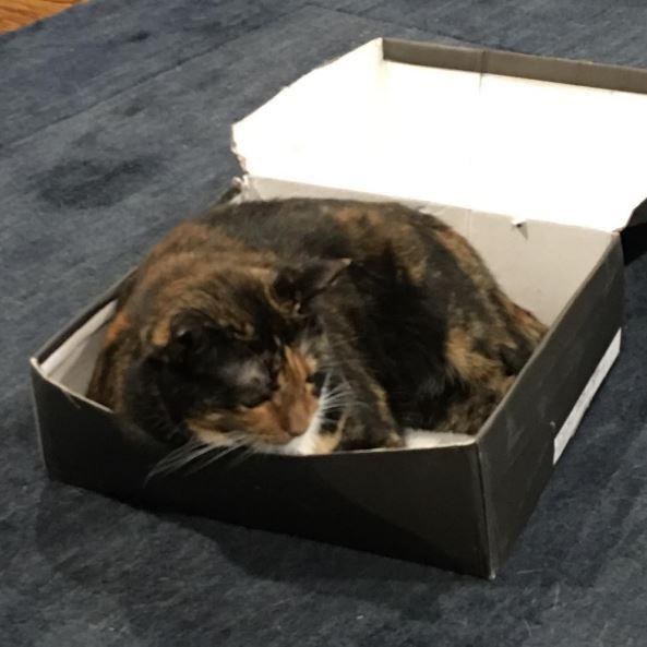 mia the cat 2