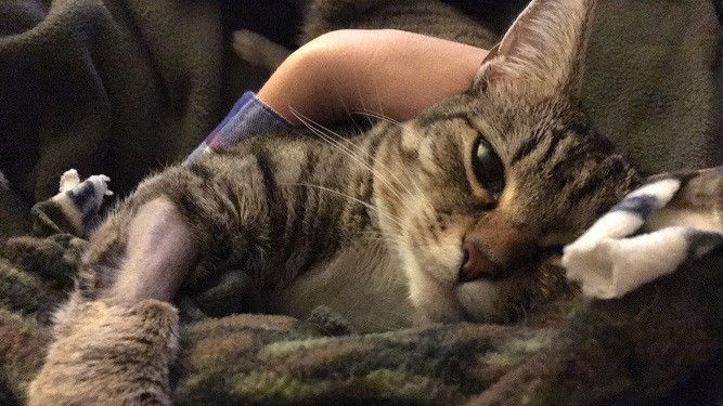 minnie at the vet 4