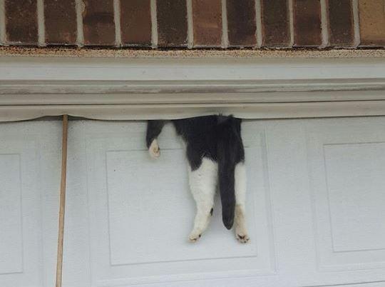 bella stuck in garage door
