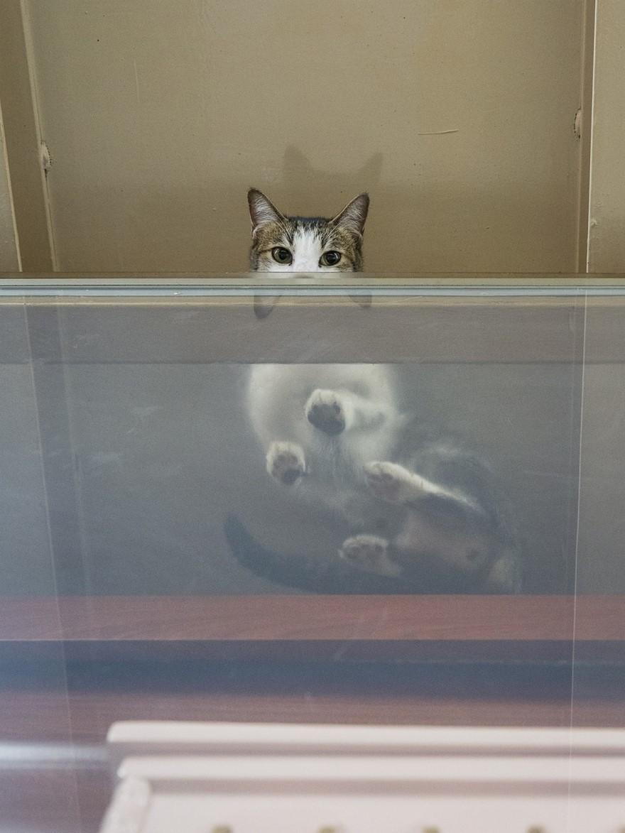 hong kong cats 12