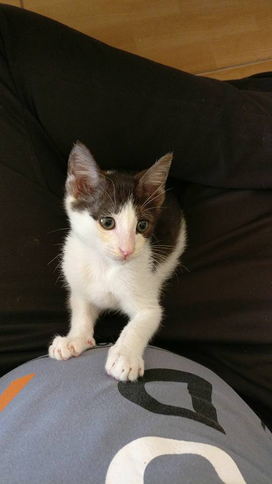 dante the kitten 6
