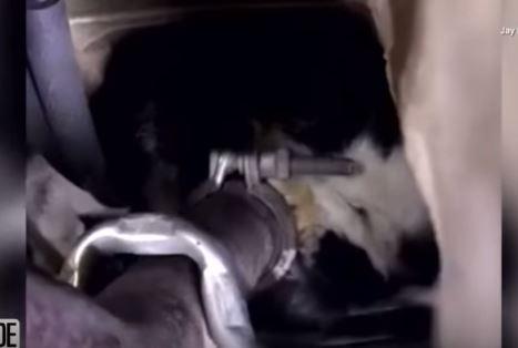 cat stuck in van