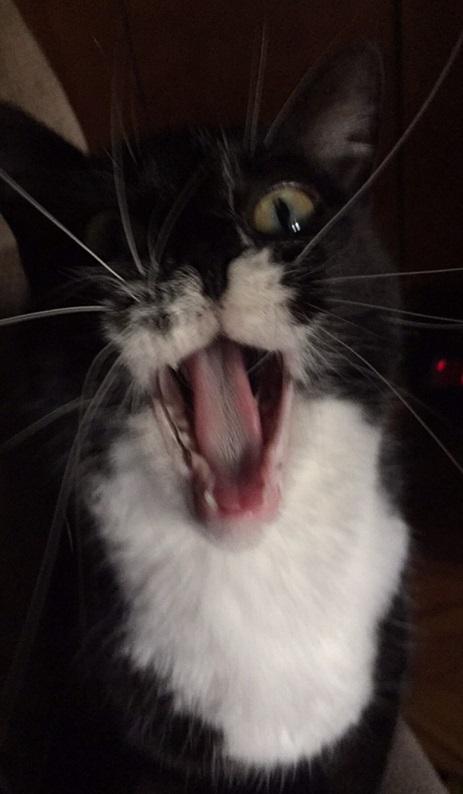 dash the cat 3