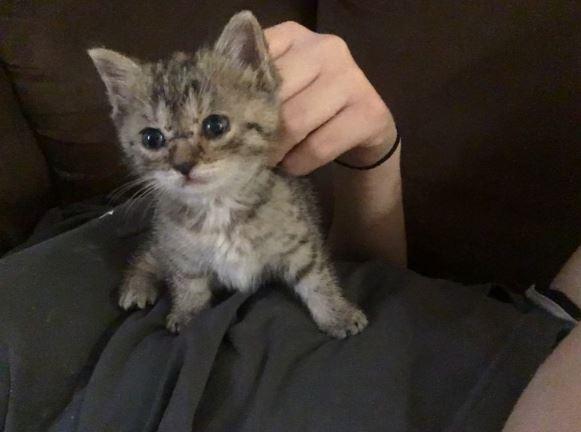 athena the kitten 3