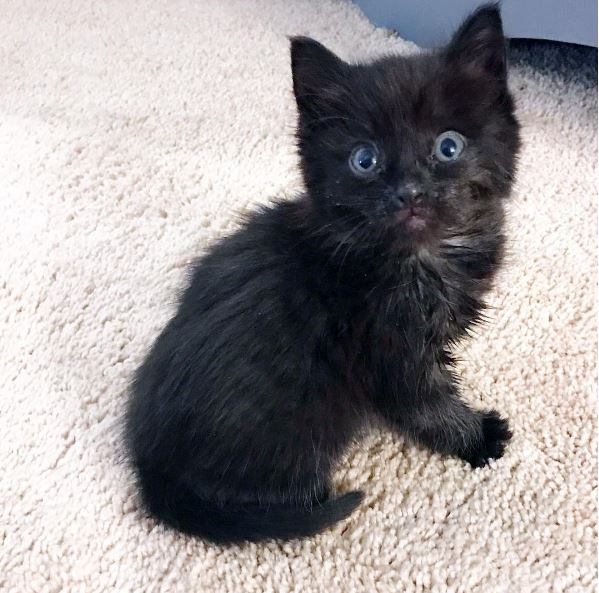 lucy the kitten 2
