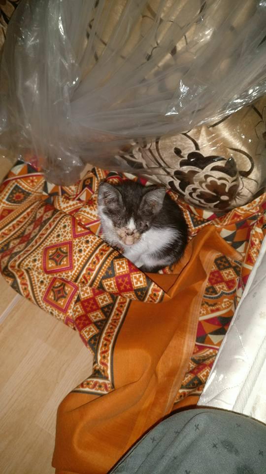 dante the kitten 1