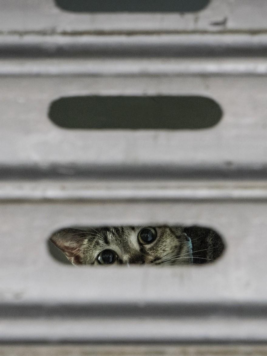hong kong cats 2
