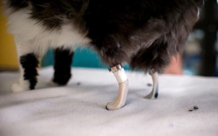 bionic paws 3