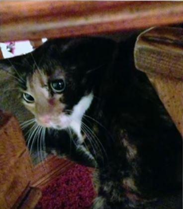 mia the cat 7