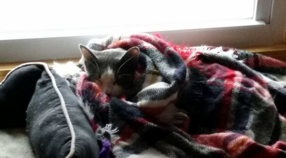 indy the kitten 11