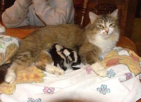Image result for dog mum nursing kitties