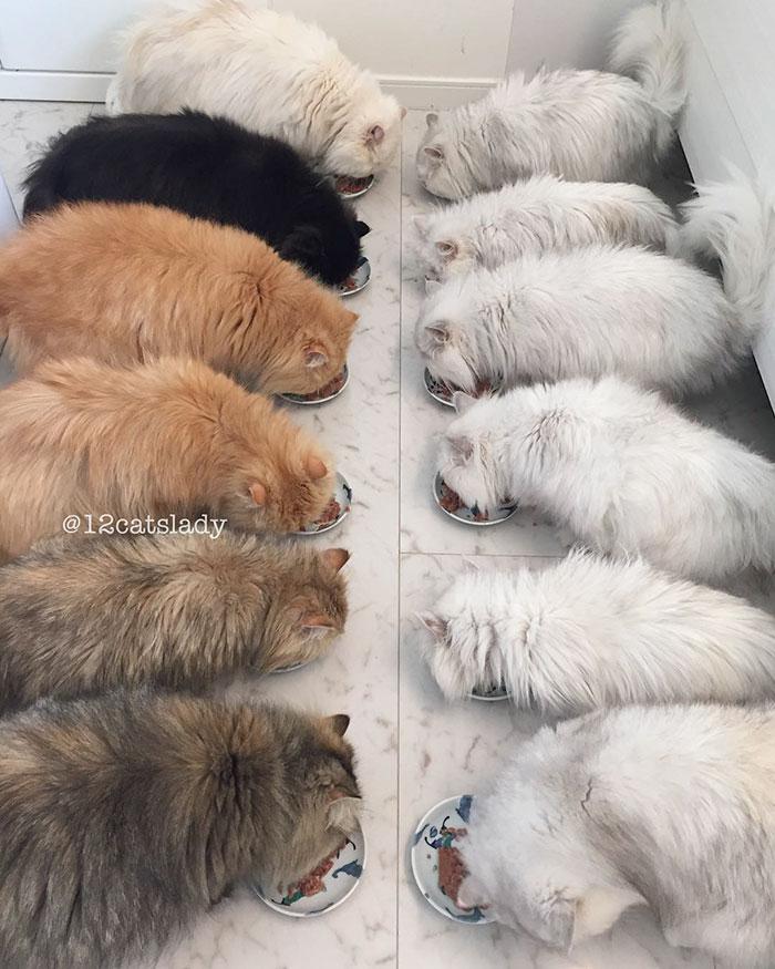 12 persian cats 5