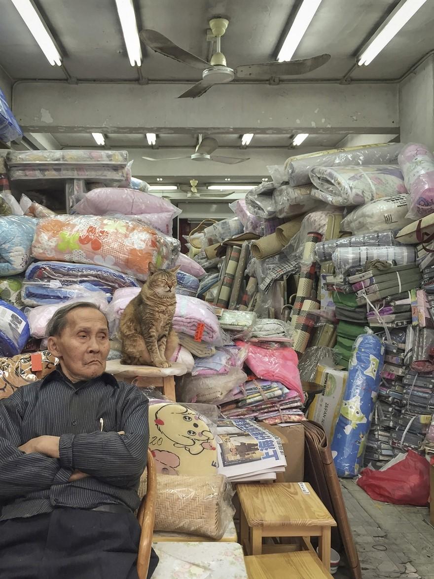 hong kong cats 11