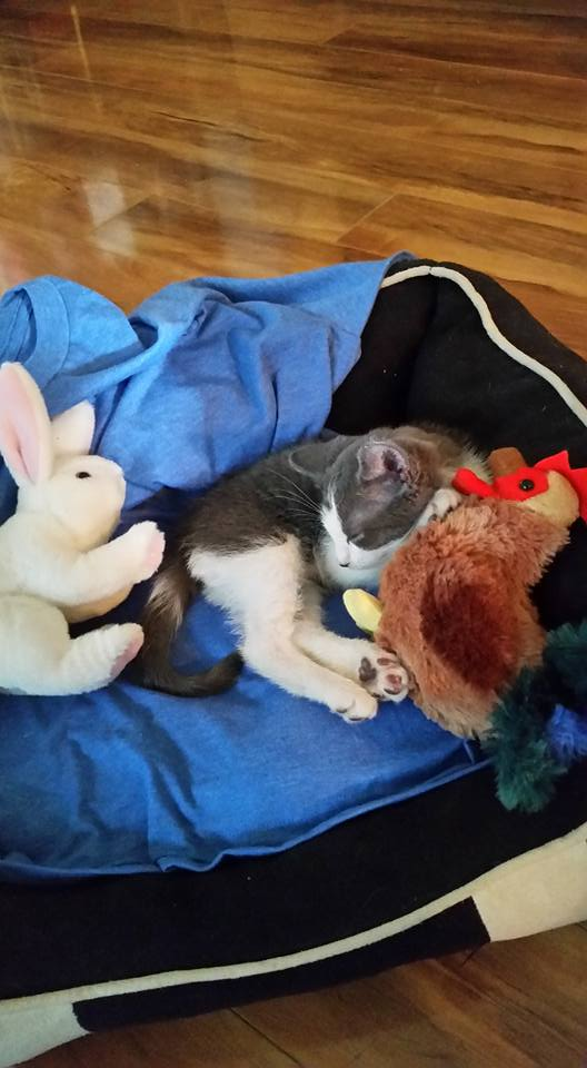 indy the kitten 9
