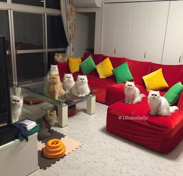12 persian cats 4
