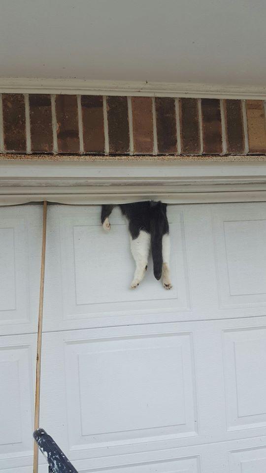 bella the cat stuck in garage door
