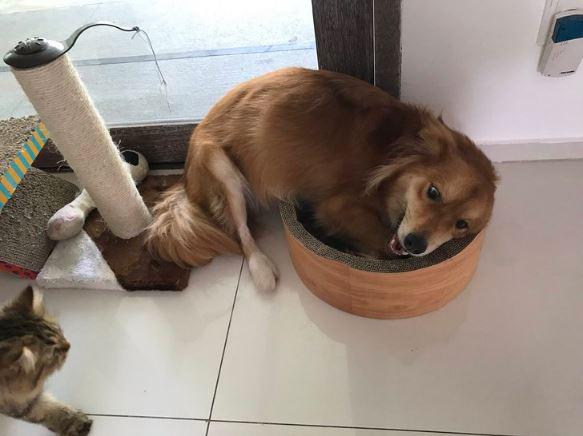 dog steals cat bed 2