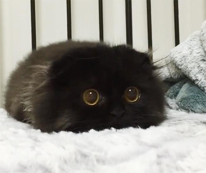 cat eyes 4