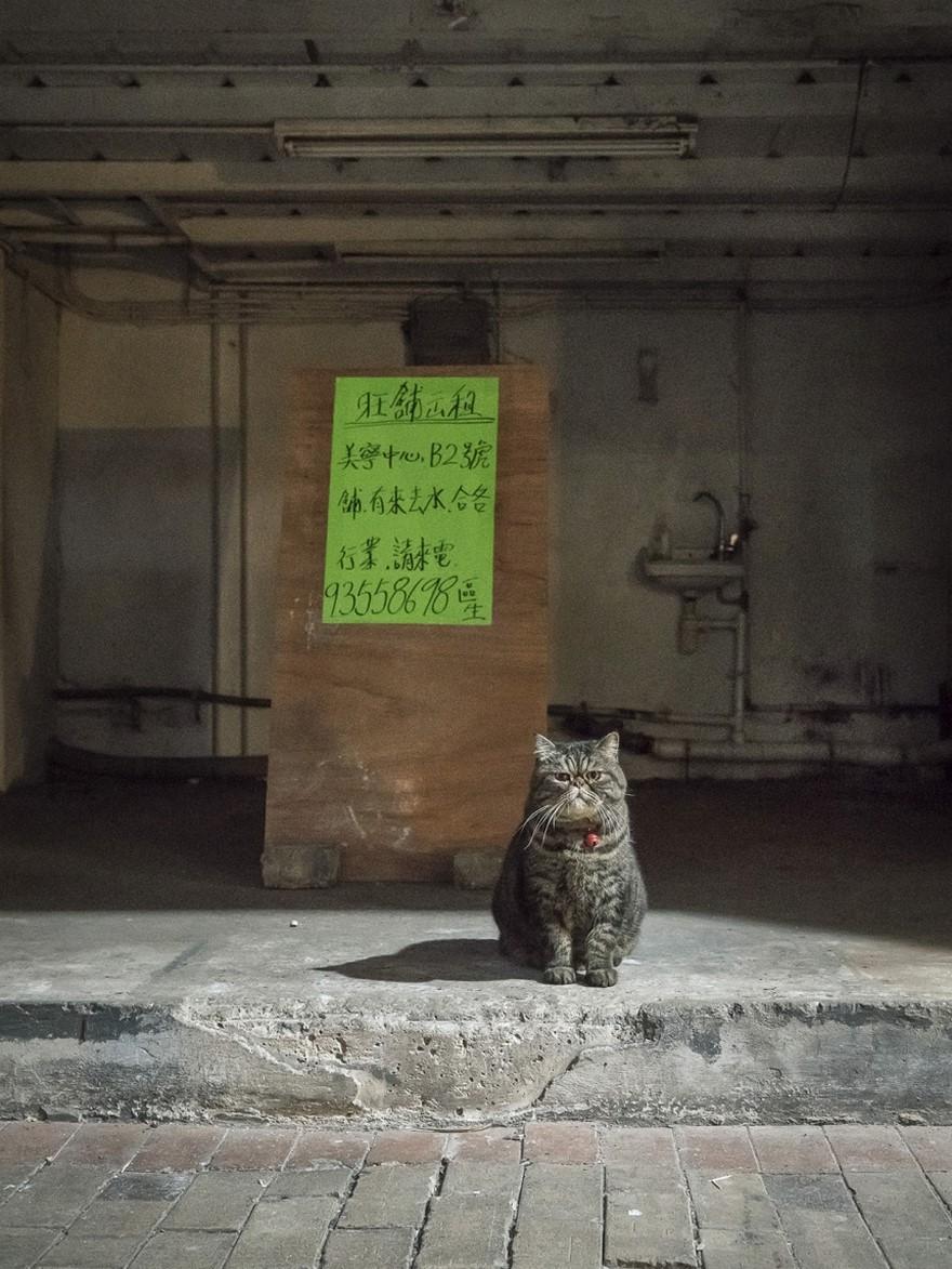 hong kong cats 8