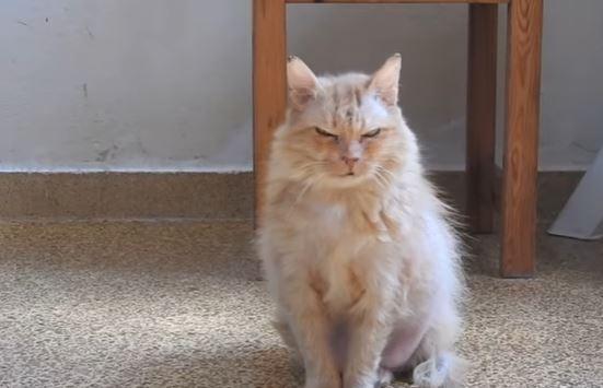 cinnamon the cat 5